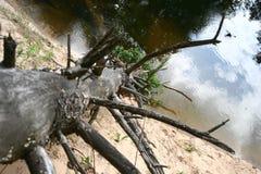 Vecchio albero asciutto solo caduto in fiume Immagini Stock