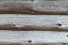 Vecchio albero casa di legno in termiti Struttura fotografia stock libera da diritti