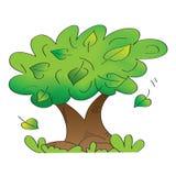 Vecchio albero con i fogli di caduta Immagini Stock Libere da Diritti