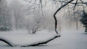 Vecchio albero del tasso Fotografie Stock