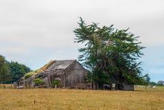 Vecchio albero di Cypress del granaio fotografia stock libera da diritti
