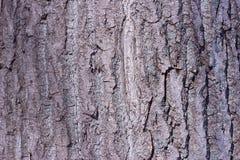 Vecchio albero di legno fotografia stock libera da diritti