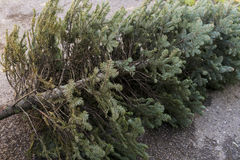 Vecchio albero di Natale immagine stock