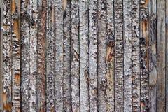 Vecchio albero di struttura Fotografia Stock