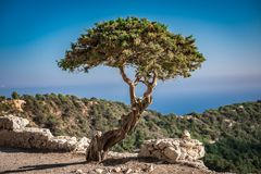 Vecchio albero fra le pietre contro il cielo fotografie stock libere da diritti