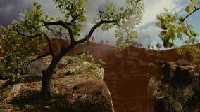 Vecchio albero Gnarly Fotografie Stock Libere da Diritti