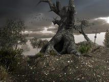 Vecchio albero gnarly Fotografia Stock