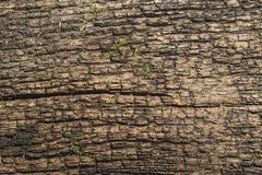 Vecchio albero incrinato Immagini Stock
