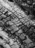 Vecchio albero incrinato Fotografia Stock