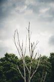 Vecchio albero morto Fotografia Stock
