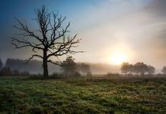Vecchio albero nel campo con nebbia fotografia stock libera da diritti