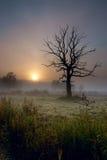 Vecchio albero nel campo con nebbia fotografia stock