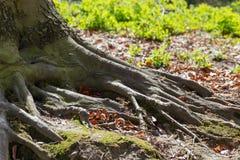 vecchio albero nel giardino Immagini Stock Libere da Diritti
