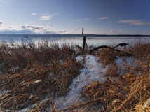 Vecchio albero nel paesaggio dell'acqua Fotografia Stock Libera da Diritti