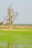 Vecchio albero nel termine di autunno senza le foglie Fotografie Stock Libere da Diritti