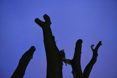 Vecchio albero nella notte Fotografie Stock Libere da Diritti