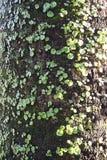 Vecchio albero nella sosta Fotografia Stock