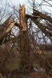 Vecchio albero rotto Fotografie Stock Libere da Diritti