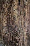 Vecchio albero ruvido con la corteccia pelata Immagine Stock Libera da Diritti