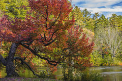 Vecchio albero saggio Fotografie Stock Libere da Diritti