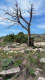 Vecchio albero secco isolato nelle montagne Immagini Stock Libere da Diritti