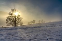 Vecchio albero solo nella neve fotografia stock libera da diritti
