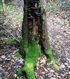 Vecchio albero stupefacente Immagine Stock Libera da Diritti