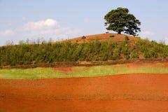 Vecchio albero su sbarco rosso Immagine Stock Libera da Diritti