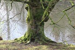 Vecchio albero vicino all'acqua Fotografia Stock