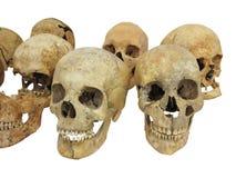 Vecchio archeologico trova il cranio umano del cranio isolato su bianco Immagine Stock
