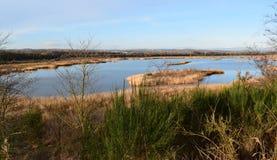 Vecchio attracchi la riserva della zona umida di RSPB Immagini Stock Libere da Diritti