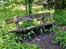 Vecchio banco di legno decomposto circondato con le piante Fotografia Stock