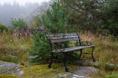 Vecchio banco nella foresta Immagini Stock Libere da Diritti