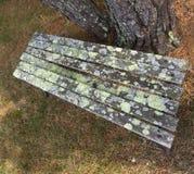 Vecchio banco sotto l'albero con muschio ed il lichene Fotografia Stock Libera da Diritti