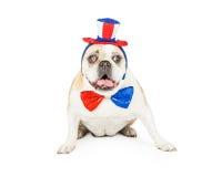 Vecchio bulldog che celebra il quarto di luglio Fotografia Stock Libera da Diritti