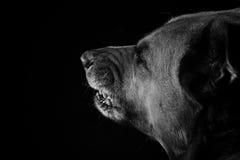 Vecchio cane immagini stock libere da diritti