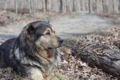 Vecchio cane dell'azienda agricola Fotografie Stock