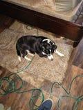 Vecchio cane dolce fotografia stock libera da diritti