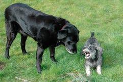 Vecchio cane e nuovo cane Fotografie Stock