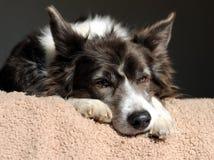 Vecchio cane trasandato Fotografia Stock Libera da Diritti