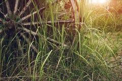 Vecchio cartwheel in un'erba alta Immagini Stock Libere da Diritti