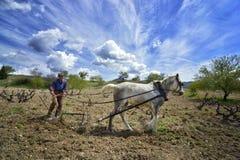 Vecchio cavallo di aratro dell'agricoltore Immagini Stock Libere da Diritti