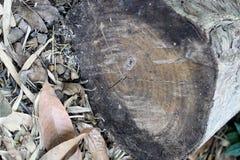 Vecchio ceppo Fotografia Stock Libera da Diritti