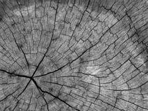 Vecchio ceppo Fotografie Stock Libere da Diritti