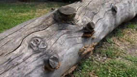 Vecchio ceppo Fotografia Stock