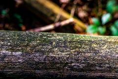 Vecchio ceppo arrugginito con la foresta come fondo immagine stock