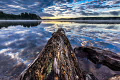 Vecchio ceppo che si sporge nel lago di kioshkoki nel parco di stato del algonquin, Canada Immagine Stock