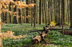 Vecchio ceppo circondato dai fiori Fotografie Stock