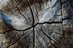 Vecchio ceppo con le crepe Fotografia Stock