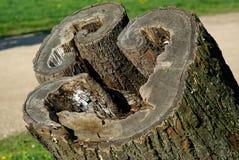 Vecchio ceppo della forma musicale in un parco della citt? immagini stock libere da diritti